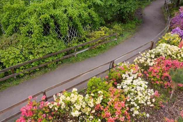 На клумбе в парке цветут азалии. разноцветные весенние цветы.