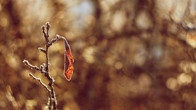 夕日の美しい自然のショット。美しいぼかしとカラフルなbとの古いレンズの写真
