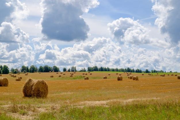 夏のわらbaのある風景