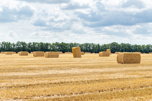 収穫された穀物穀物小麦大麦ライ麦穀物畑、干し草の山わらba杭曇り青空、農業農業農村経済農学概念の立方体の長方形の形状