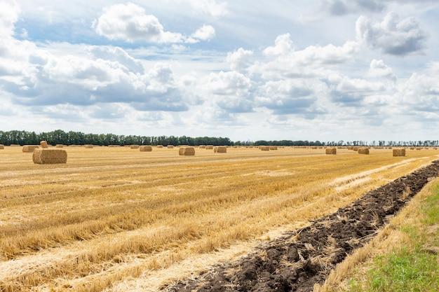 収穫された穀物シリアル小麦大麦ライ麦穀物畑、干し草の山わらba杭立方長方形