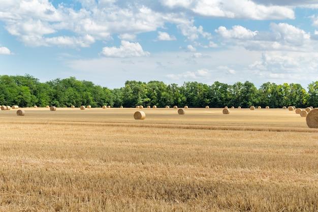 収穫された穀物小麦大麦ライ麦の穀物畑、干し草の山のわらbaの杭と曇りの青い空に丸い形
