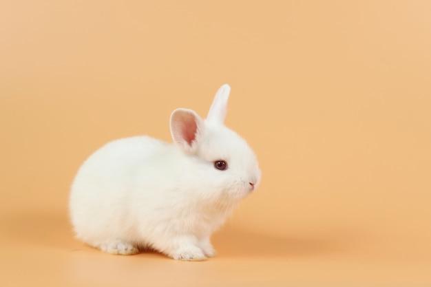 아기와 귀여운 흰 토끼