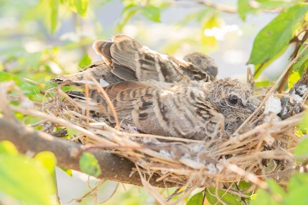 Baby bird on nest in nature