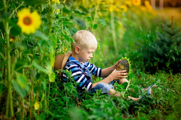 Baby boy blond sitting in a field with sunflowers in summer, children's lifestyle.