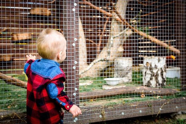 Мальчик ищет животное в клетке