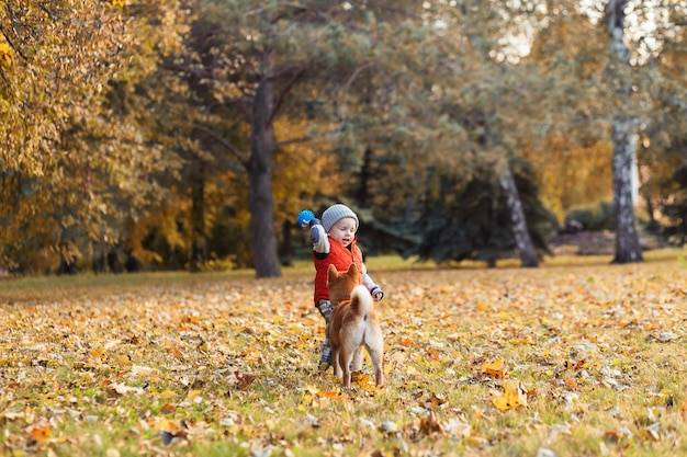 Baby boy playing with his red dog on the lawn in the autumn park. shiba inu puppy and child are best friends, happyness and carefree childhood concept