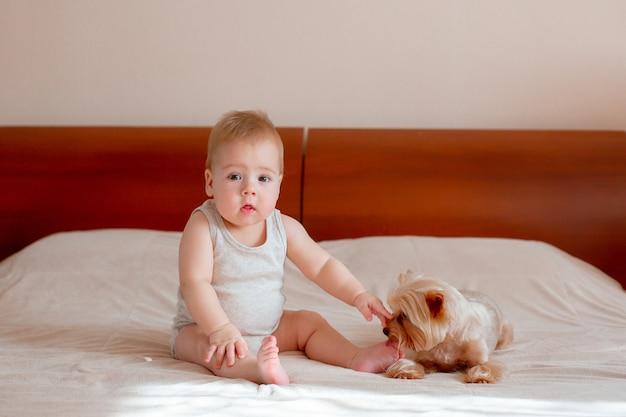 男の子は彼のペットの犬と一緒にベッドの寝室で遊ぶ