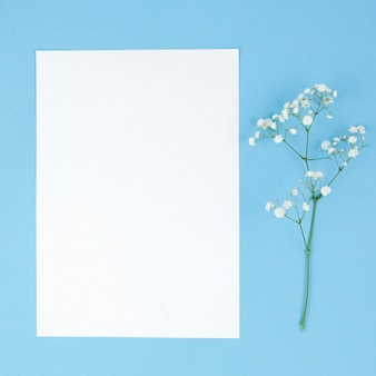 Baby breath flowers and blank white paper on turquoise backdrop