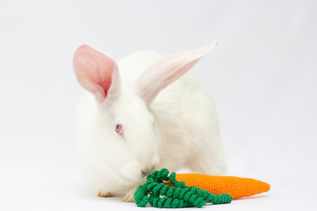 Baby bunny with carrot isolated on gray background. big white rabbit