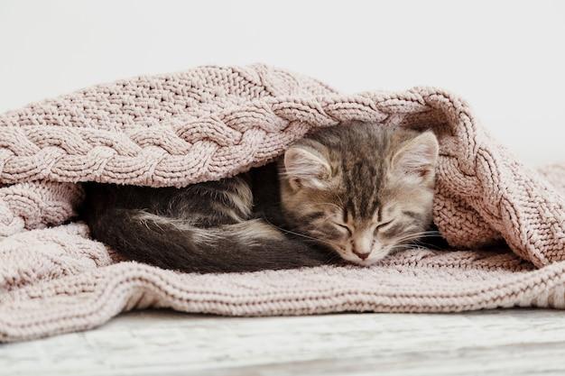 Котенок свернулся калачиком и спал на уютном розовом одеяле. пушистый полосатый котенок удобно дремлет на вязаной кровати. котенок лежит, расслабляется.