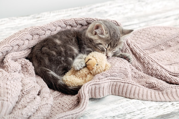 赤ちゃん猫は居心地の良い毛布で寝ておもちゃを抱きしめます。ふわふわのぶち子猫がピンクのニットベッドでテディベアと快適にスヌーズ。スペースをコピーします。