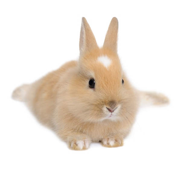 아기 토끼 절연에 가까이