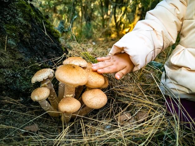 Ребенок собирает опята в осеннем лесу, красивые съедобные грибы в осеннем лесу