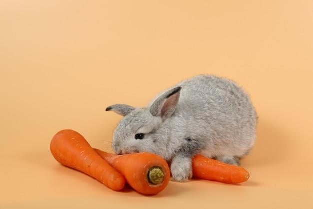 ニンジンを食べる赤ちゃんかわいい茶色のイースターのウサギのウサギ