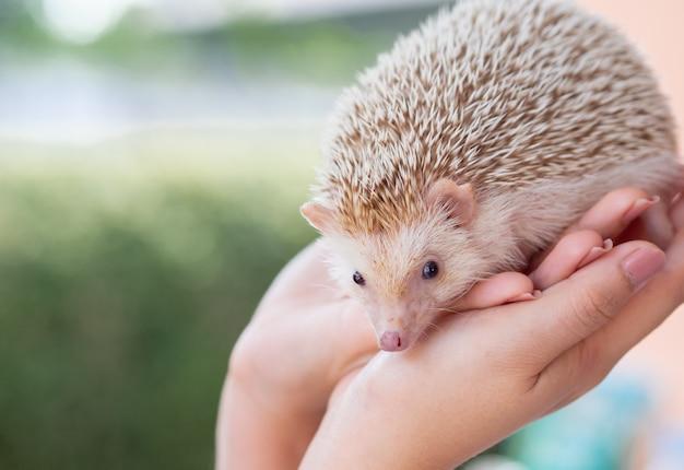 Baby cute hedgehog portrait