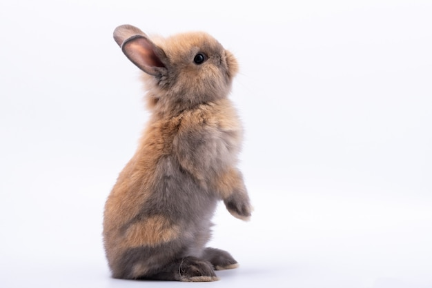 Baby cute rabbits on white isolated background.