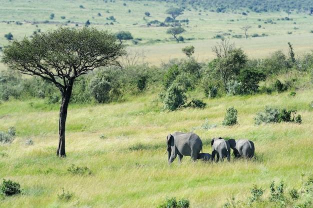 ケニア、アフリカ国立保護区のゾウの赤ちゃん