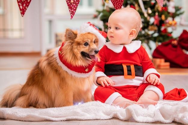 サンタクロースの衣装を着た赤ちゃんとふわふわのポメラニアンスピッツが、飾られたクリスマスツリーを背景に家で一緒に遊んでいます。