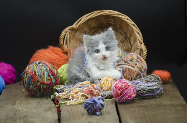 Baby kitten playing with ball yarn. kitten with a ball