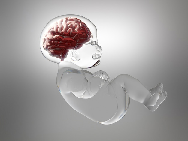Baby made of glass with brain inside.