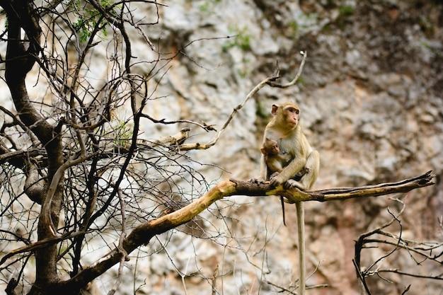 Baby monkey hugging mom on branch of tree