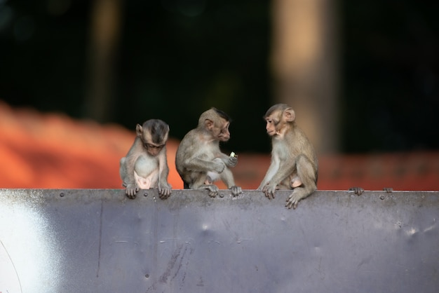 Baby monkeys are playing naughty