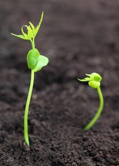 Детеныш нима вырастает из почвы