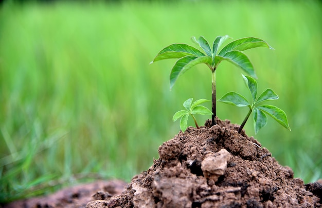 Baby plants in soil on green nature background, earth and ecology concepts environmental.