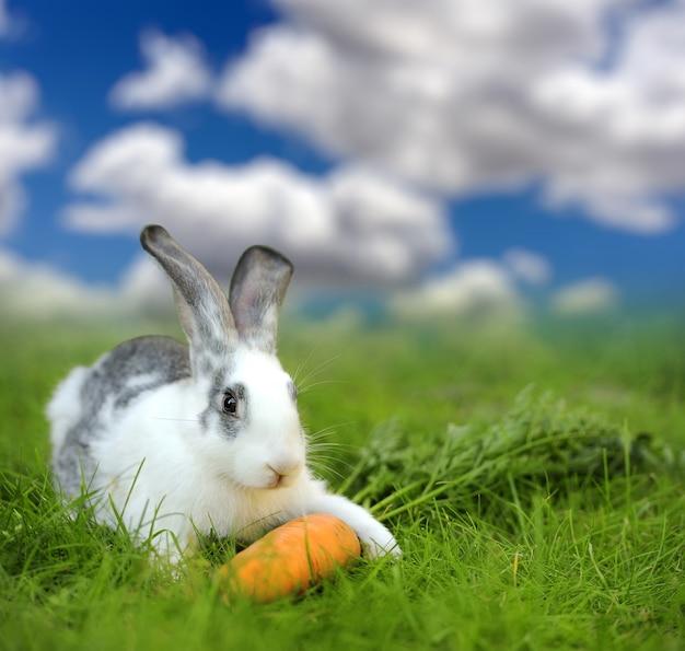 초원에 잔디에 아기 토끼입니다. 여름날