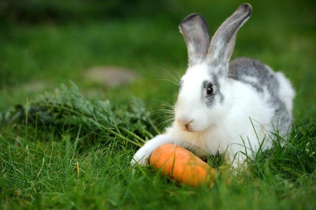 草の中の赤ちゃんウサギ。夏の日