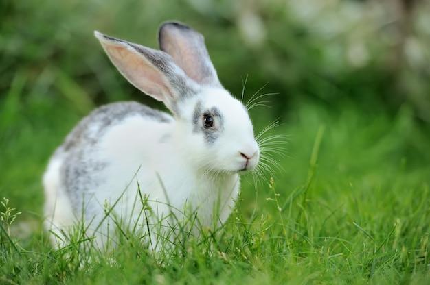 草の中の赤ちゃんウサギ