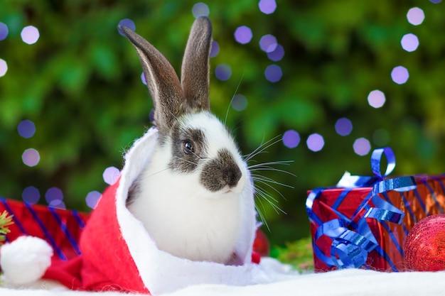 サンタクロースの帽子のウサギの贈り物