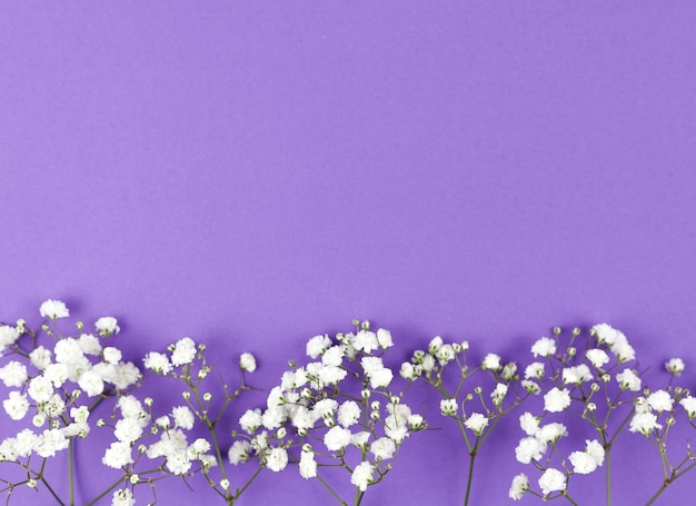 Baby's breath flower at the bottom of purple backdrop