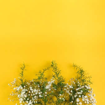 Baby's breath flowers and leaves against yellow background