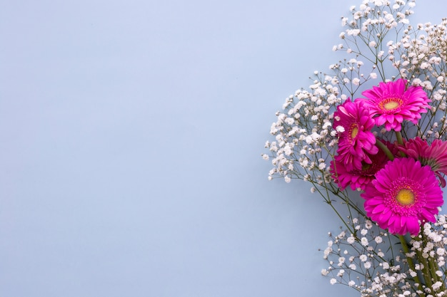 Baby's breath flowers and pink gerbera flowers above blue background