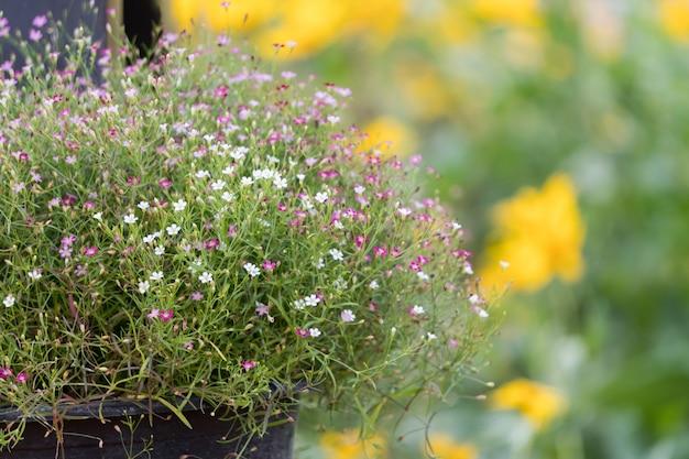 아기는 정원에서 작은 꽃을 호흡합니다.
