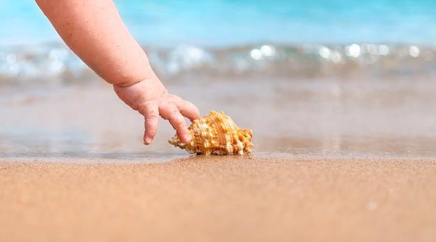 海岸で貝殻を取る赤ちゃんの手
