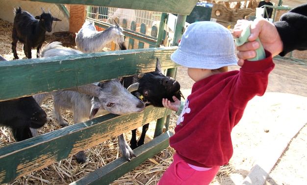 Baby touches small kids in the pen in a kibbutz israel