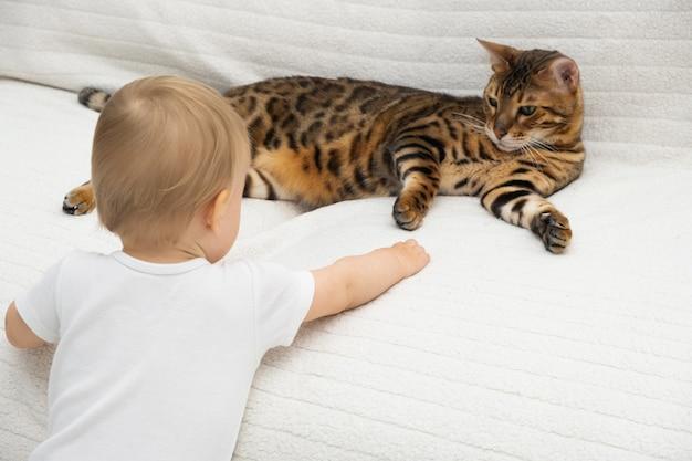 Ребенок пытается прикоснуться, погладить красивую бенгальскую кошку, лежащую на белом диване у себя дома. отношения ребенка и домашнего животного. выборочный фокус, вид сзади.