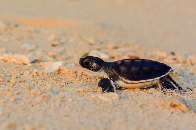 해변의 아기 거북이