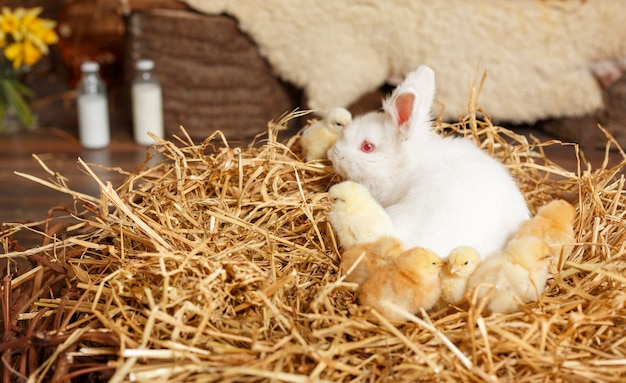 赤ちゃん白い小さなウサギ。イースター休暇のコンセプト。イースターかわいいウサギ