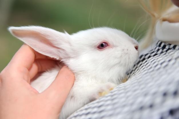 手に赤ちゃんの白いウサギ
