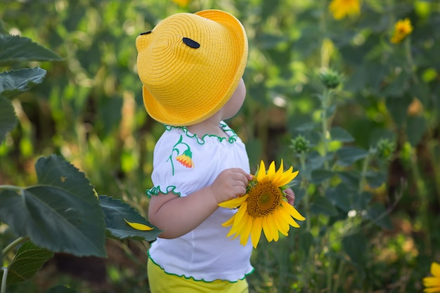Baby in a yellow hat. sunflower field in summer at sunset. bright yellow sunflowers.