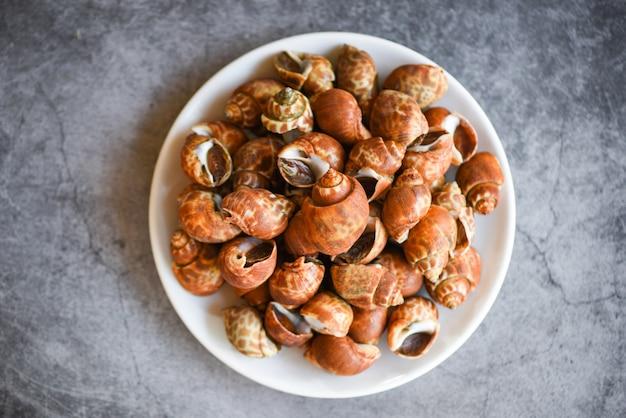 Морепродукты моллюсков babylonia areolata на белой тарелке, готовые к употреблению или приготовленные - пятнистый вавилон с морскими ракушками