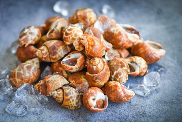 Рецепты из морепродуктов babylonia areolata на льду, готовые к употреблению или приготовленные / пятнистый вавилон с морскими ракушками /