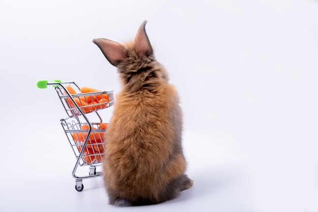 The back of the baby cute rabbits has a pointed ears, brown fur and cart with fresh carrots on white background
