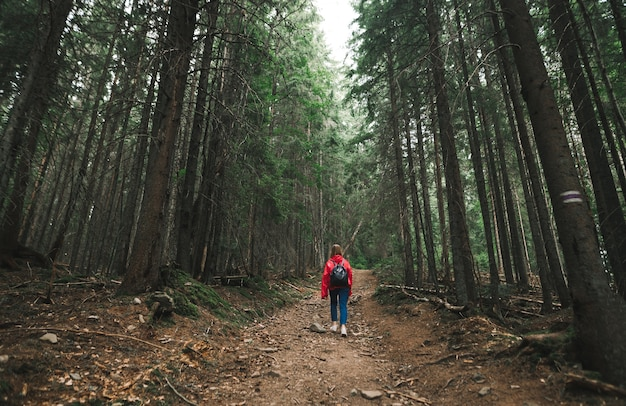 カジュアルな服装のハイカーの女の子の背中は森の小道の山を登る