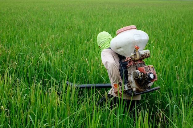 Back of thai farmer to herbicides or chemical fertilizers equipment on the fields green ri
