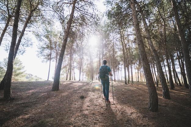 Вид сзади человек, идущий в лесу